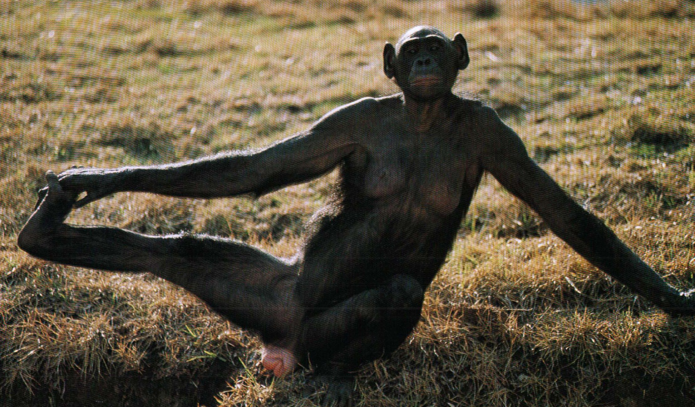 Shabani The Gorilla Is So Handsome Japanese Women Are Flocking To The Zoo To See Him